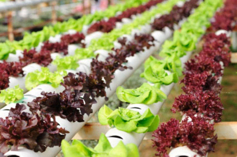 Hydroponics, Gardening Without Soil