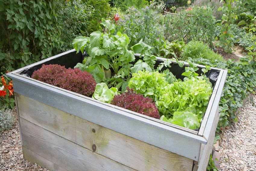 Top 10 Benefits of Raised Garden Beds