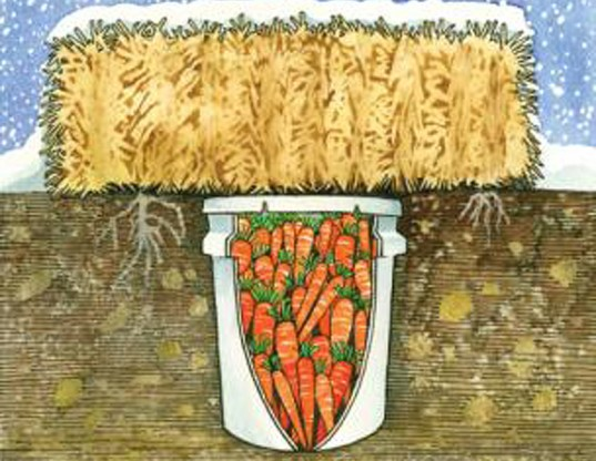 How to build a root cellar to store potatoes - Blue Planet Custodians