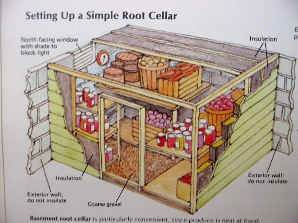 How to build a root cellar to store potatoes